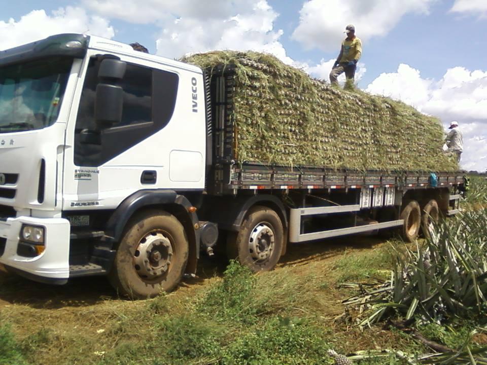 cf carga de abacaxi