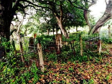 The sporadic garden