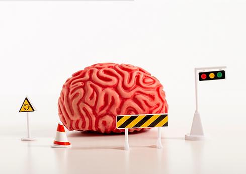 brain boundaries.png