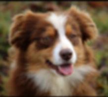 Annie (2).jpg