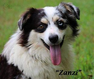 3L--Zanzi.jpg