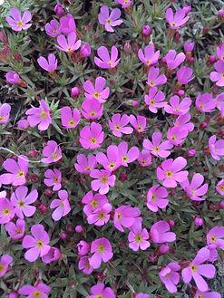 RAR pink flowers.jpg