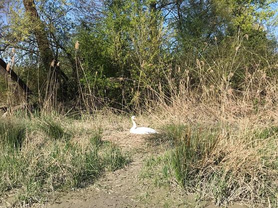 Signe avec son nid pendant la descente des gorges de la Balme