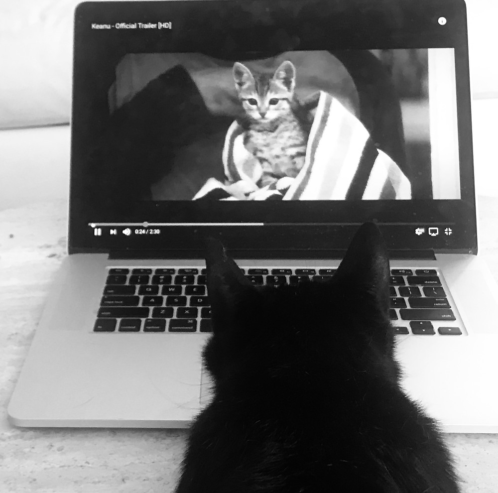 "Photo of black cat Skipper watching ""Keanu"" on a MacBook Laptop"