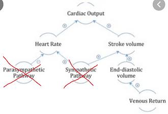 cardiac output.PNG