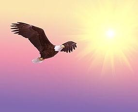 Vol de l'aigle.jpg