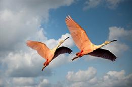 Couple oiseaux.png