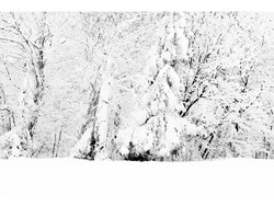 Mont Sutton en neige