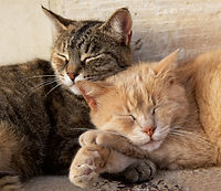 Two cats, brown and yellow, Cat relaxing