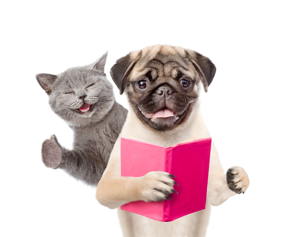 Funny cat and smart puppy with book. iso