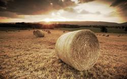 Summer-Sunset-Shenandoah-Valley-Virginia_edited