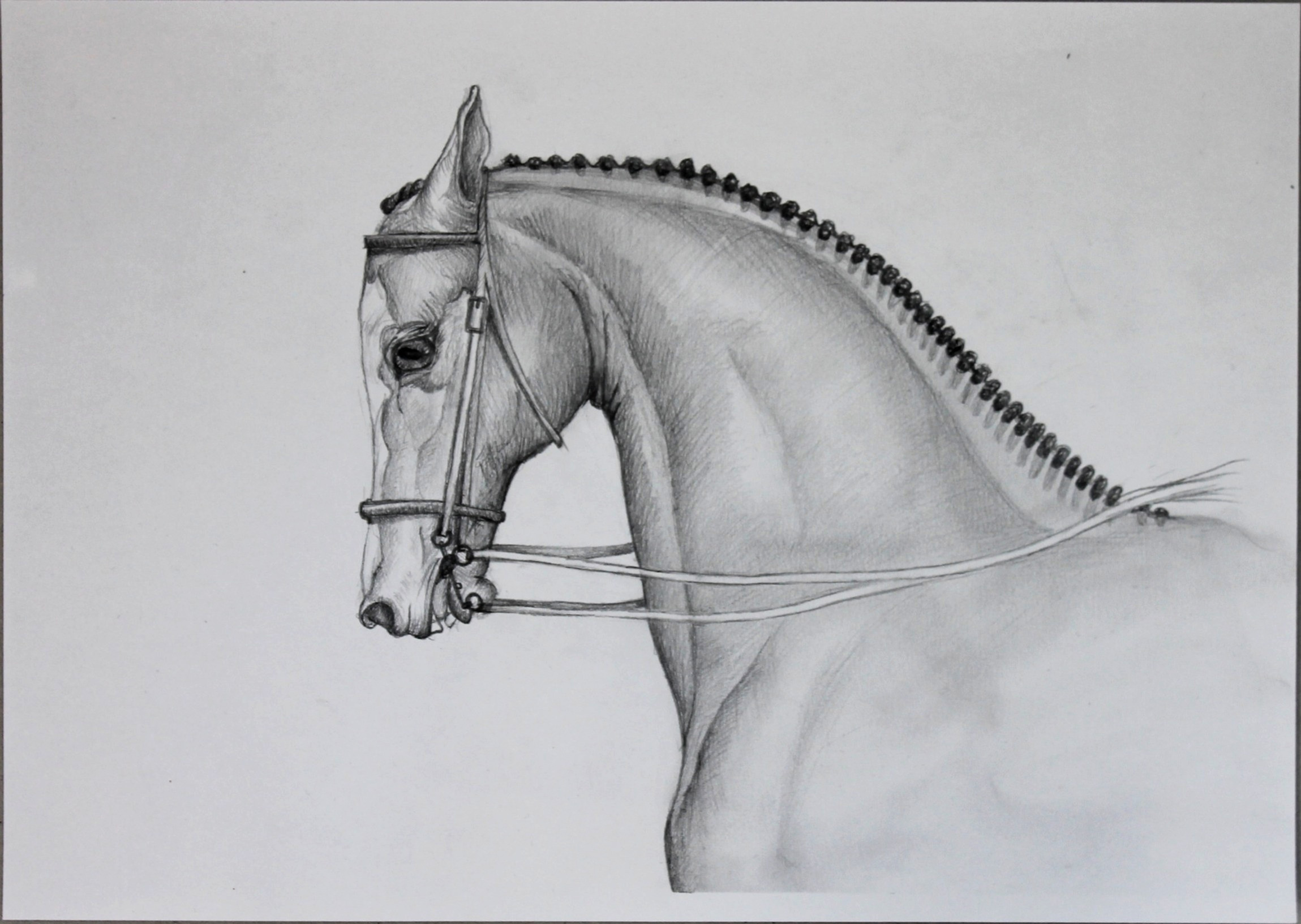 Zeichnen - Kunstkurs