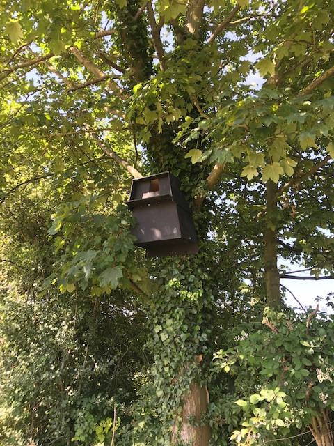 barnowl box.jpg