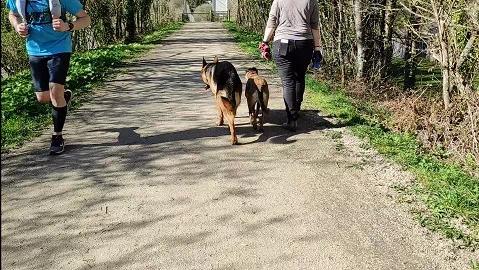 Ouija et Pépito - Séance promenade spéciale 2 chiens