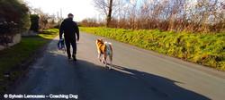 Educateur canin Manche