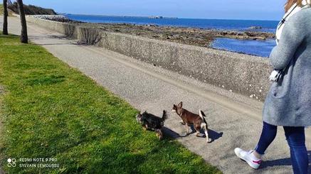 Rocky et Ruby - Séance promenade spéciale 2 chiens