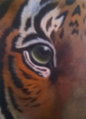 TIger eye.jpg