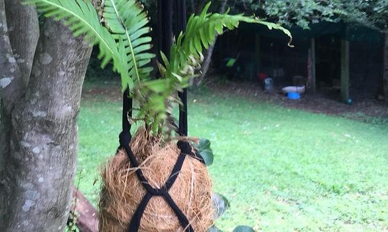Suspended Ferns.jpg