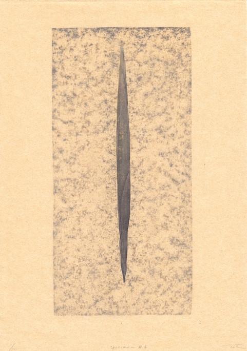 specimen #4