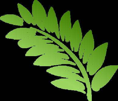 fern leaf transparent.png