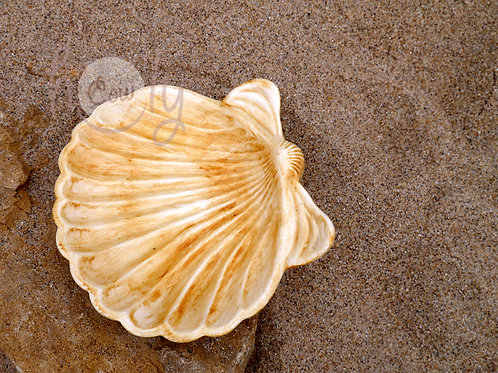 Large Ceramic Sea Shell Dish