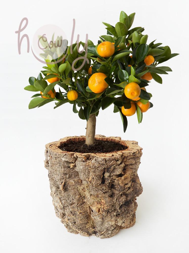 Handmade eco friendly cork flower pots
