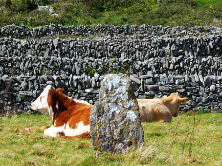 Chilling out in Inis Oirr island