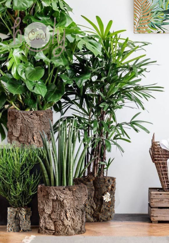 Make your home more eco friendly with our amazing handmade sustainable CORK planters