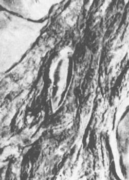 Zdjęcie lotnicze Arki wykonane przez turckiego wojskowego w 1959 r.