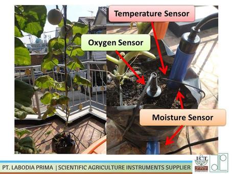 Pemantauan Suhu & Kadar Oksigen di dalam Polybag