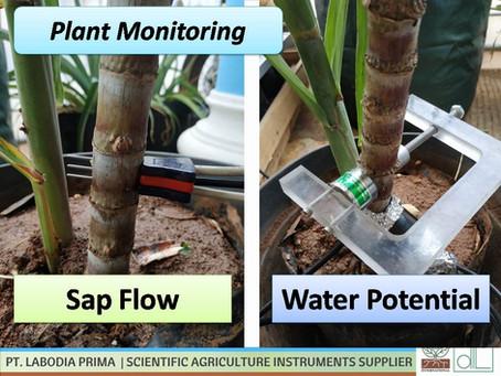 Monitoring Sap Flow & Water Potential Pada Tanaman Tebu