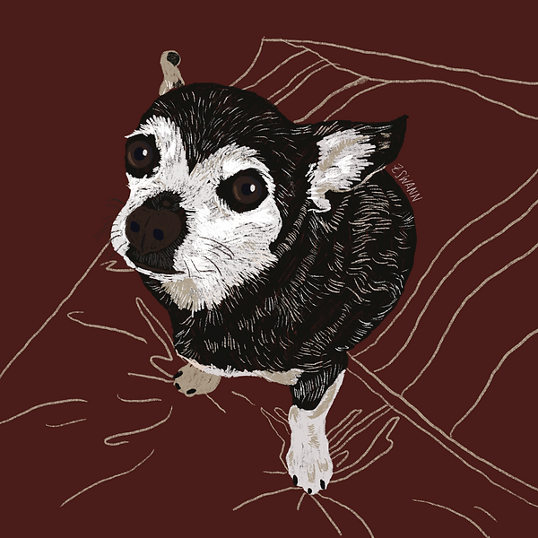 Illustration of a chihuahua