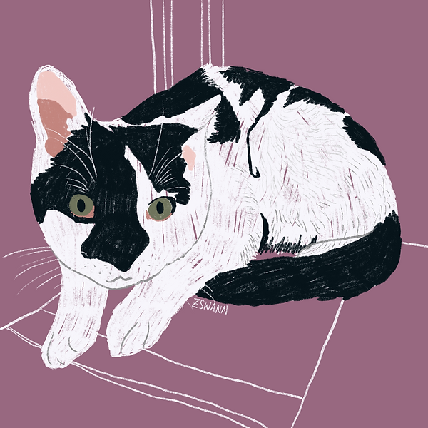 Illustration of a black and white cat