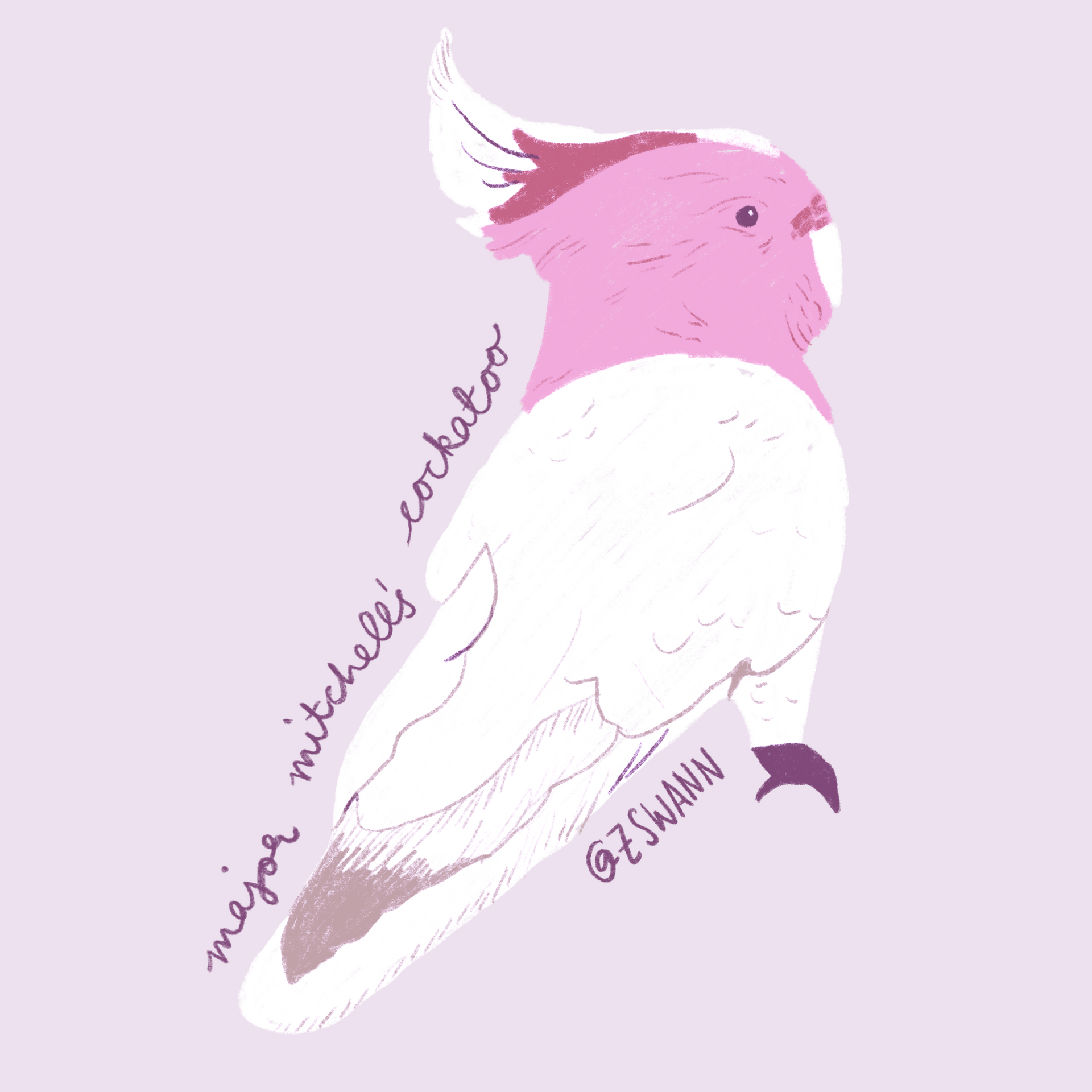 Major_Mitchell's_Cockatoo.png