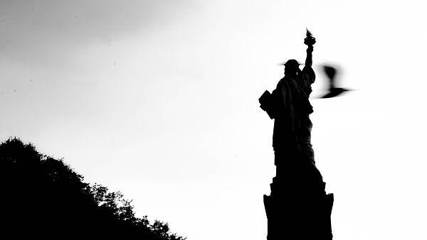New-York black and white statue of liberty statue de la liberté bird oiseau