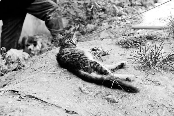 Zanzibar Stone Town Cat black and white