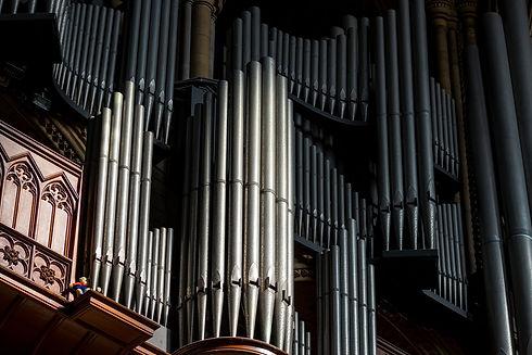 Organ-Image.jpg