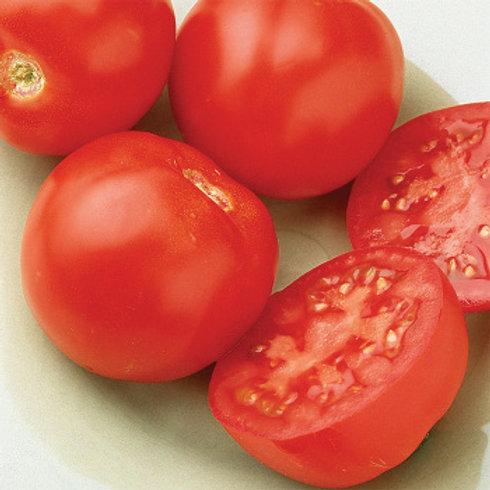 Goliath Early Bush Hybrid Tomato VFFN