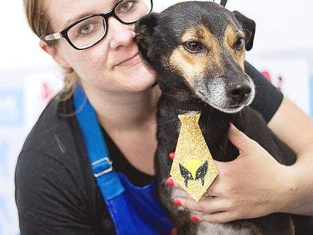Mutirão consegue arrecadar verba para reforma de abrigo para pets