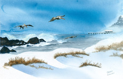 Pelicans Over the Snow Watercolor