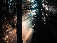 2020_08_06_FOREST-06986.jpg