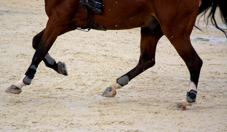 Signs of Hock Problems in Your Horse