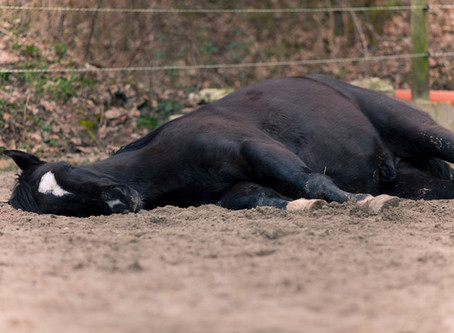 Preventing Colic in Horses