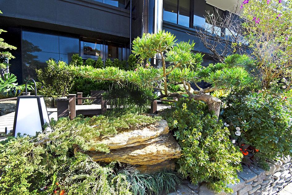 碧波白一楼日式花园2.jpg