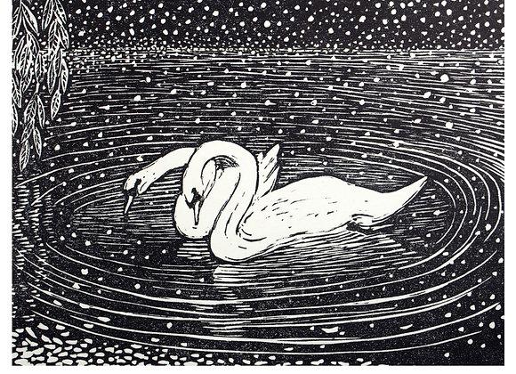 Windrush Swans