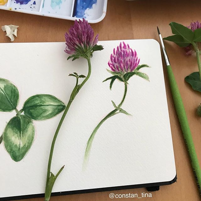 Another flower study in my new small watercolor sketchbook 💜 #flower #purpleflowers #watercolorflow