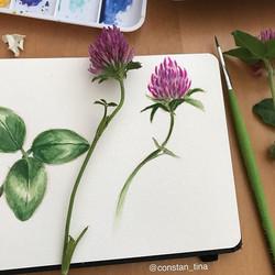 Another flower study in my new small watercolor sketchbook 💜 #flower #purpleflowers #watercolorflow