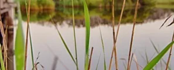 Grass lands.
