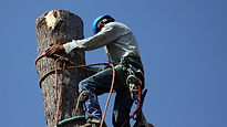 Man cutting up a tree bark.jpg