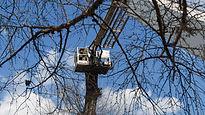 Man on a tree removal machine.jpg